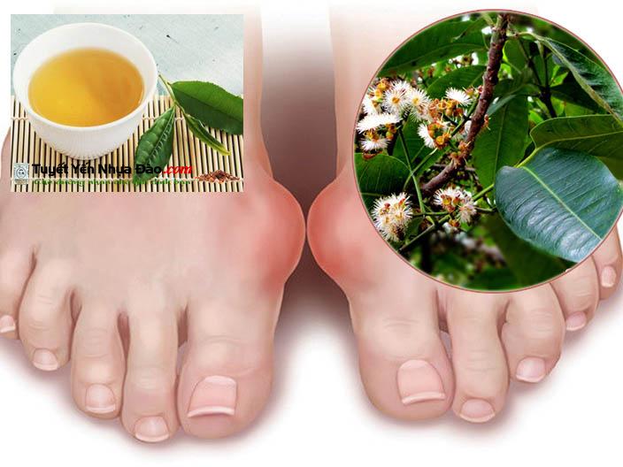 Lá vối trị bệnh gout
