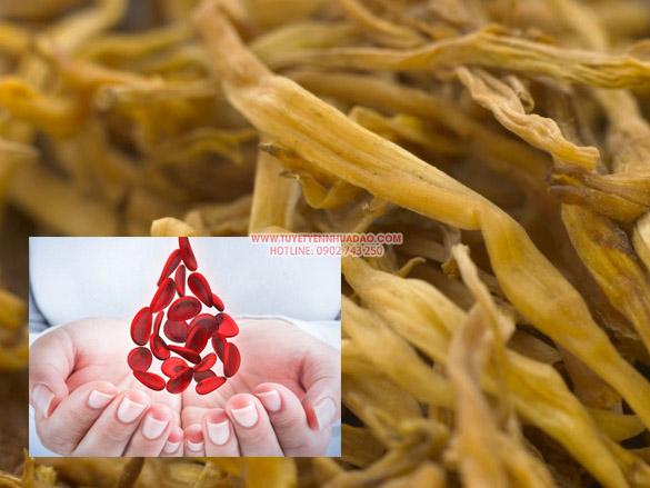 Hoa kim châm chữa bệnh giảm tiểu cầu
