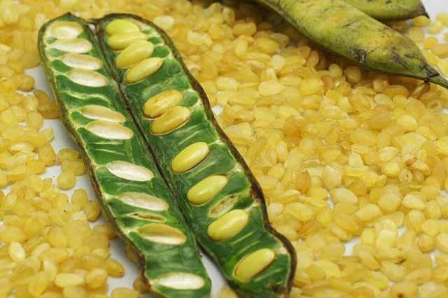 hạt bồ mể